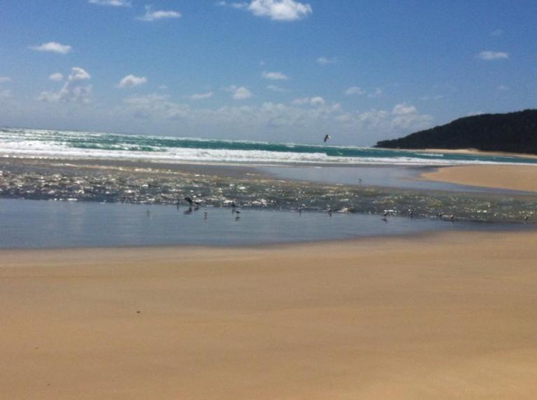 uccelli che bevono in spiaggia in australia