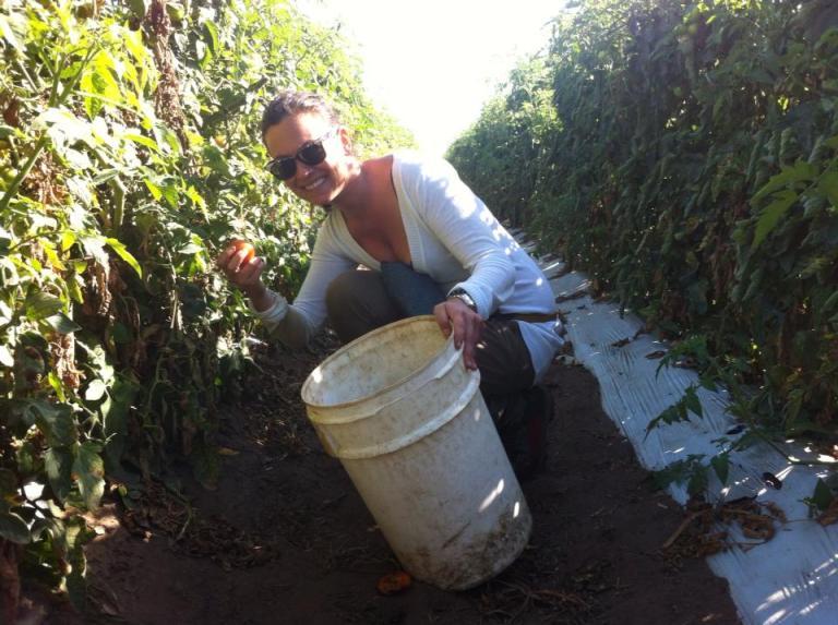ragazza che raccoglie i pomodori in fattoria in Australia