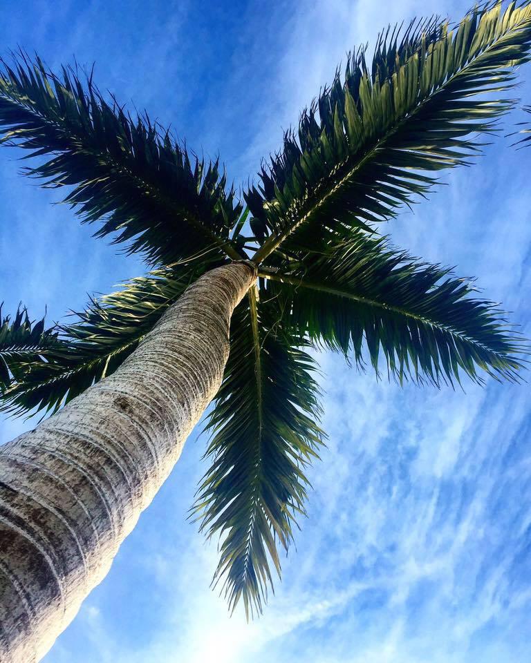 Palma-Miami