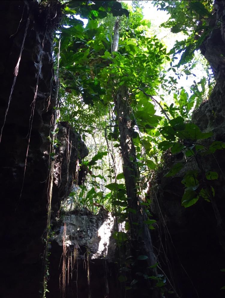 Grotta con arbusti